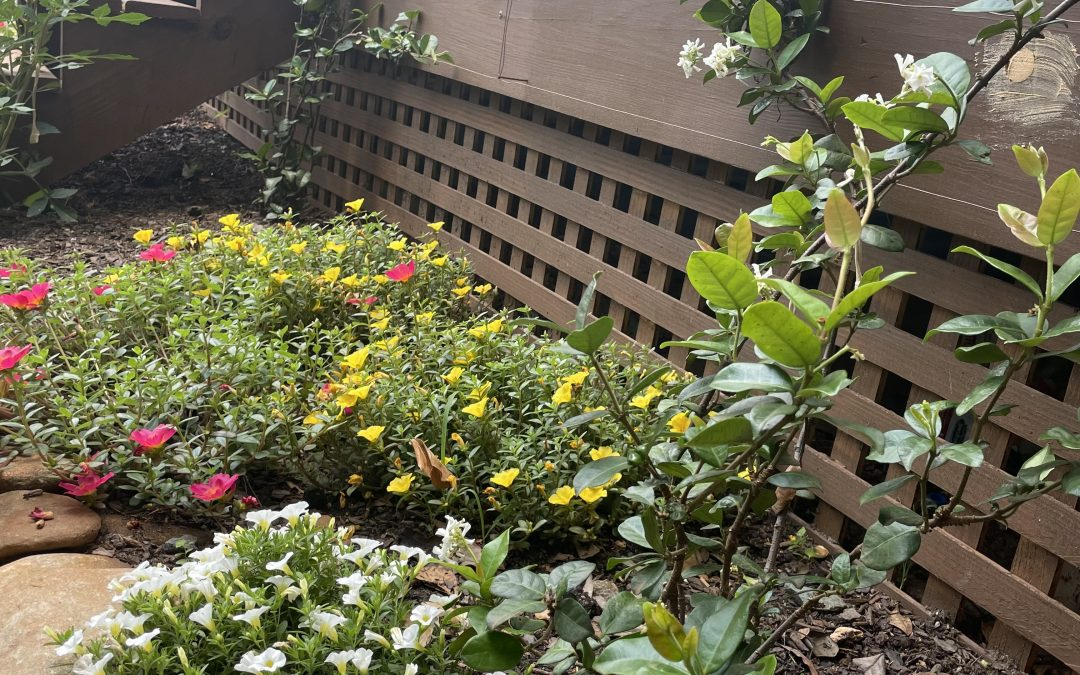 Summer Gardening Part 2: An urban farm in a backyard